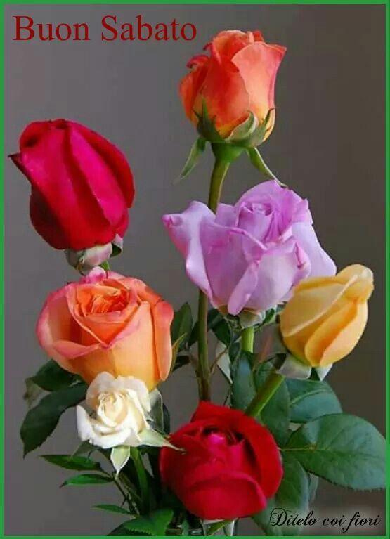 Fiori 4 Stagioni.Pin Di Clelia Stigliano Su 4 Stagioni Fiori Rosa Fiori Colorati