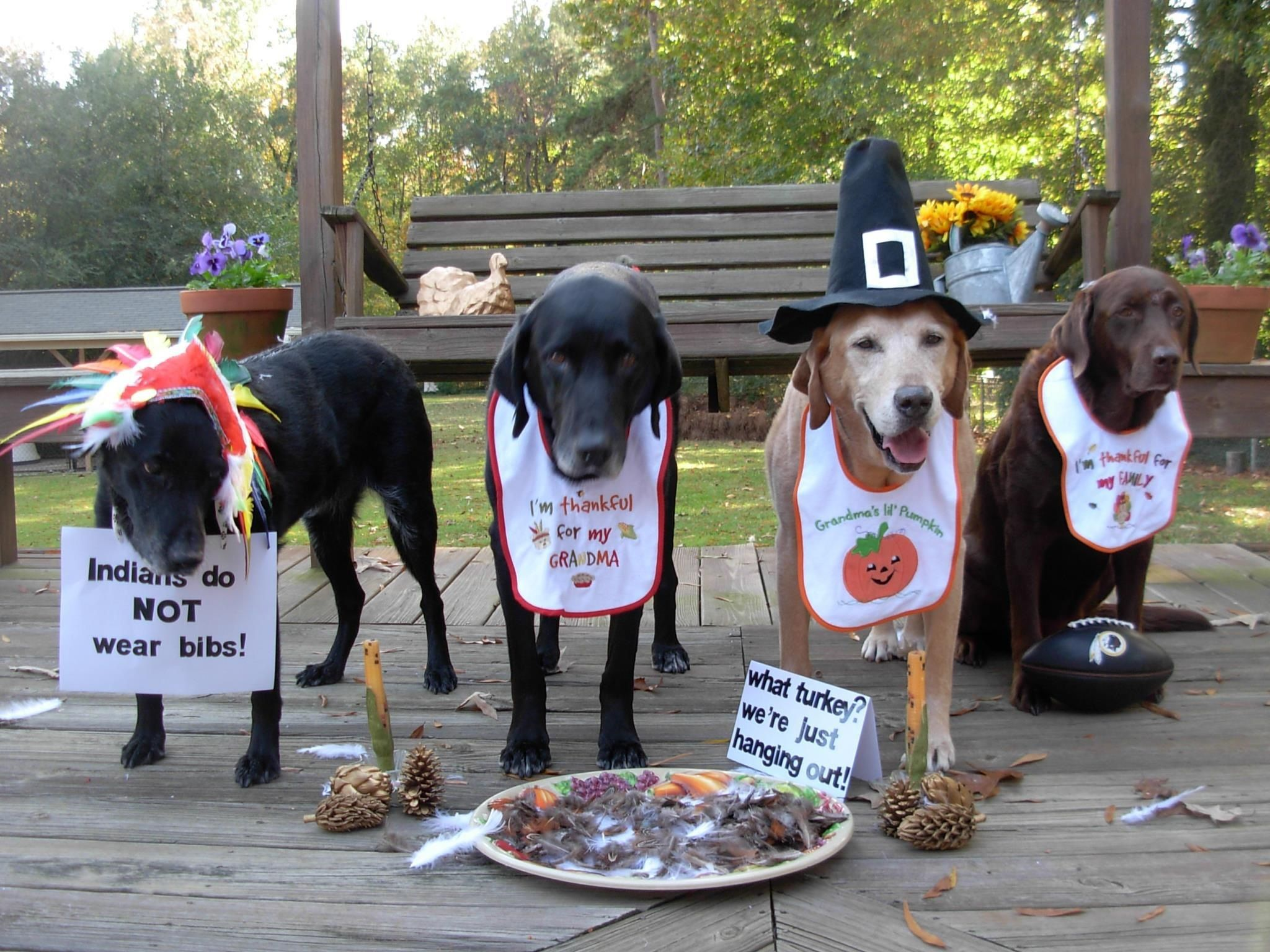 happy Golden Thanksgiving day Cute dogs, Assistance dog