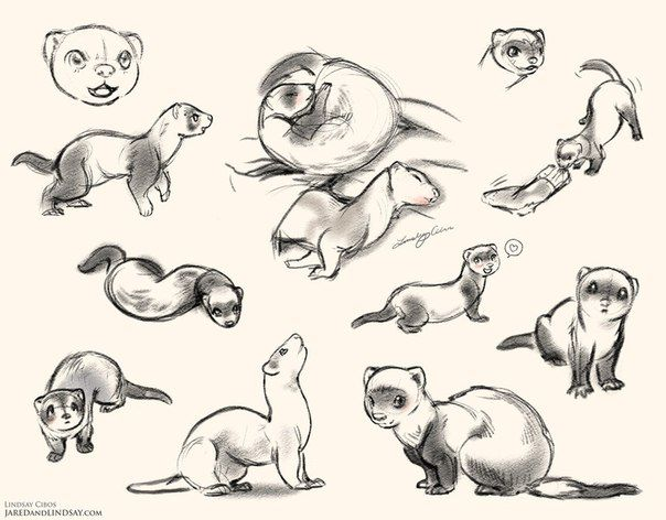 explore ferret tattoo furry drawing and more
