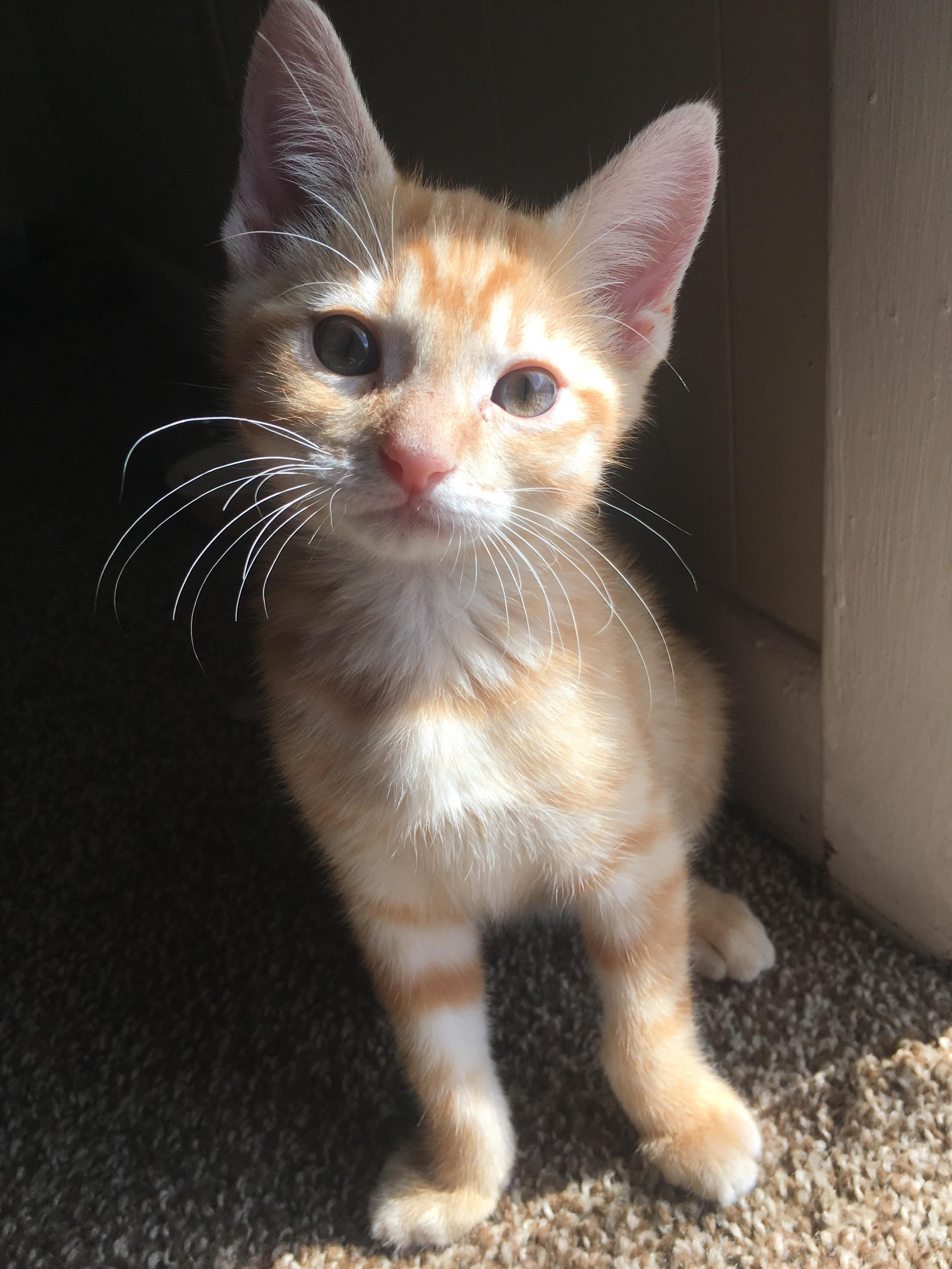 I M Growing So Fast My Mom Can T Stop Taking Pics Of Me Kittens