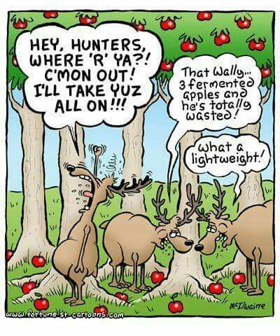 Pin by Kimberly Phillips on My kinda funny :) | Deer ...