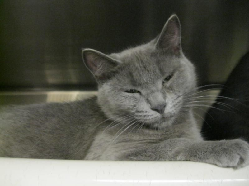 Adopt Shadow Adopted On Petfinder Grey Cats Mama Cat Cats