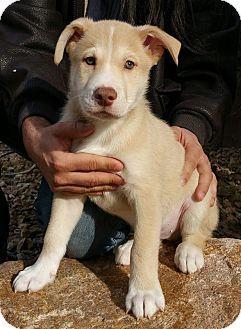 Tara S Franklin Adopted Puppy Las Vegas Nv Terrier Unknown Type Medium Mix Terrier Puppy Adoption Las Vegas