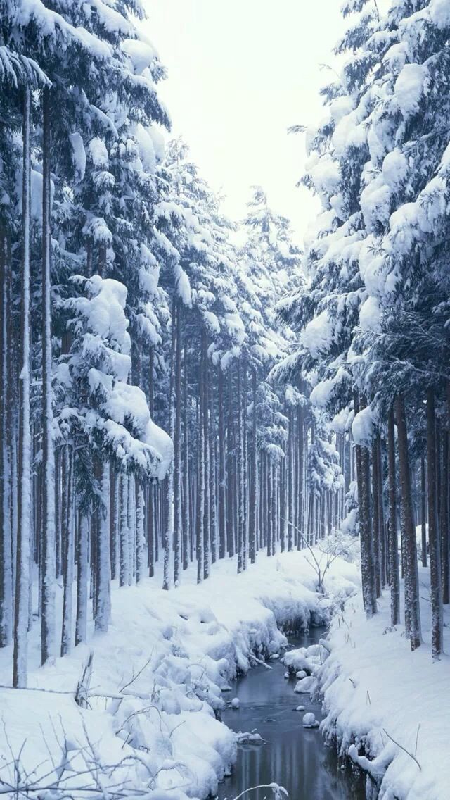 Snow covered forest #iPhone #5s #Wallpaper