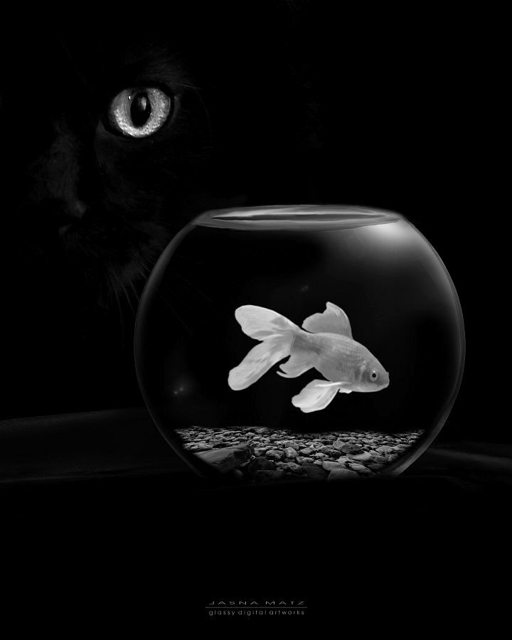 Pin By Lucky Guillen On B L A C K Black Cat Cat Photography Goldfish