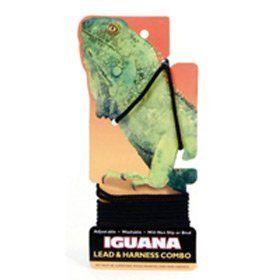 Coastal Iguana Lead And Harness Combo