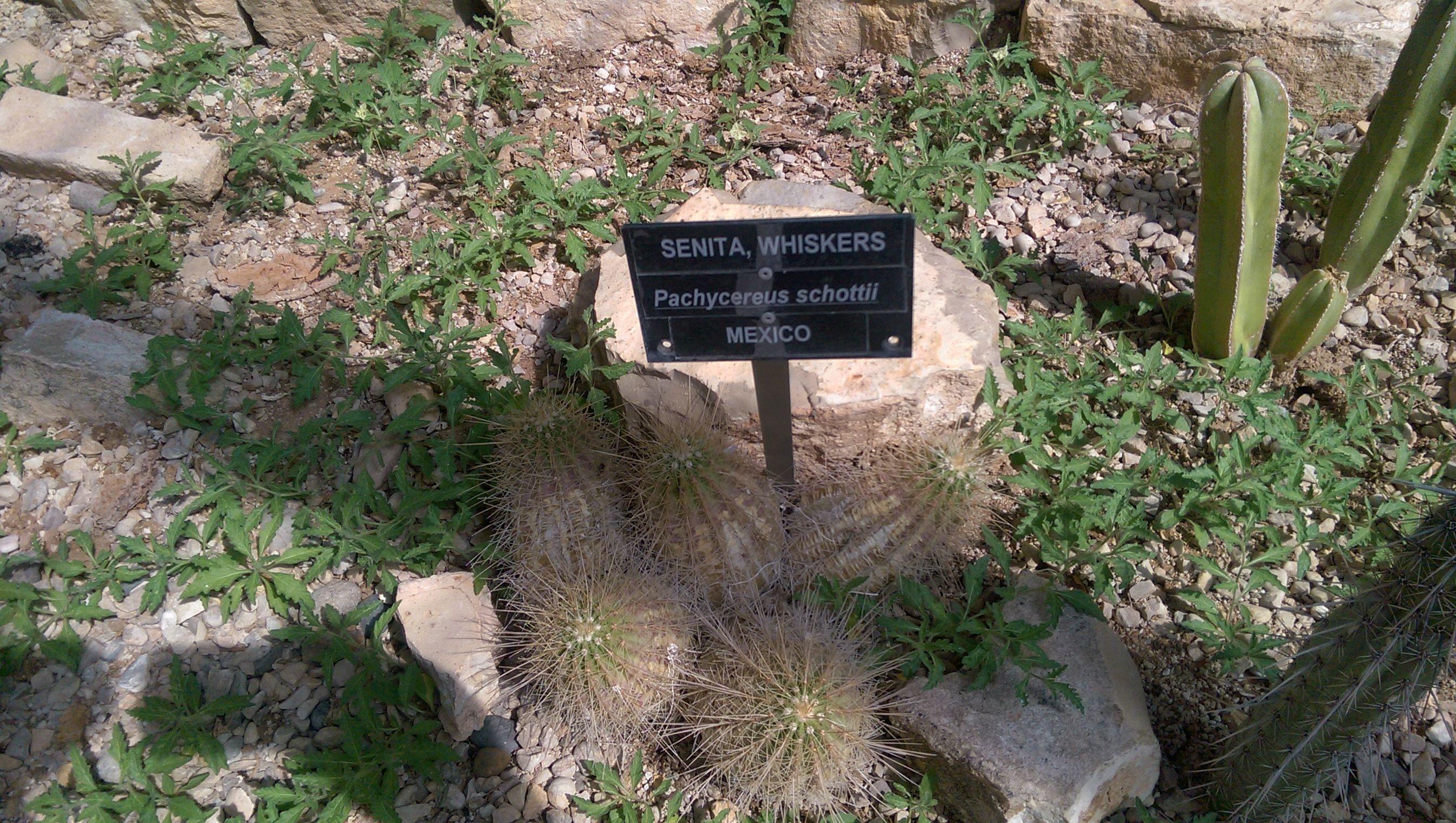 fea6780e67e22a702f15a73af8d39b50 - Living Desert Zoo And Gardens Carlsbad Nm