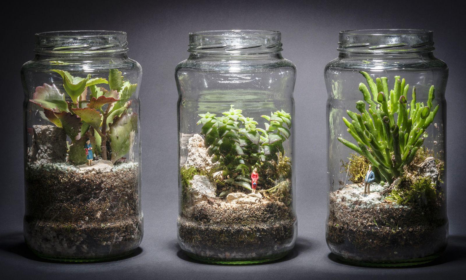 Bocaux Lumineux Pour Micro Paysages Bocaux Idees Terrariums