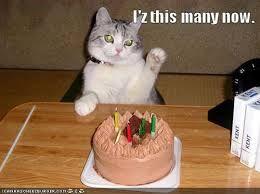 funny cats happy new year - Recherche Google