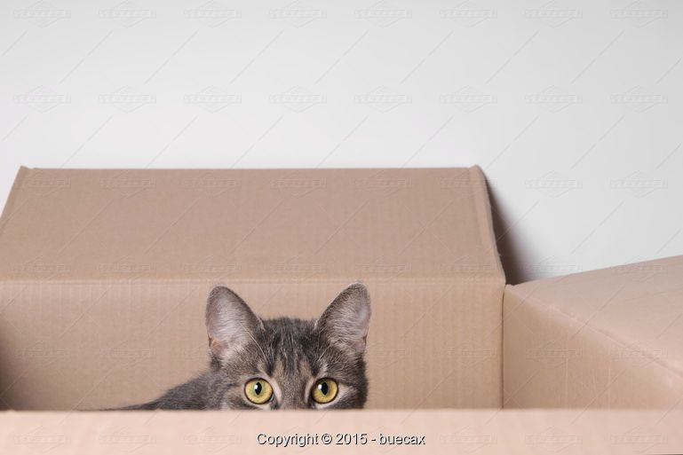 buecax: cat in box - Stock Photos & Images | Stockafe.com #stockafe #stockphotography