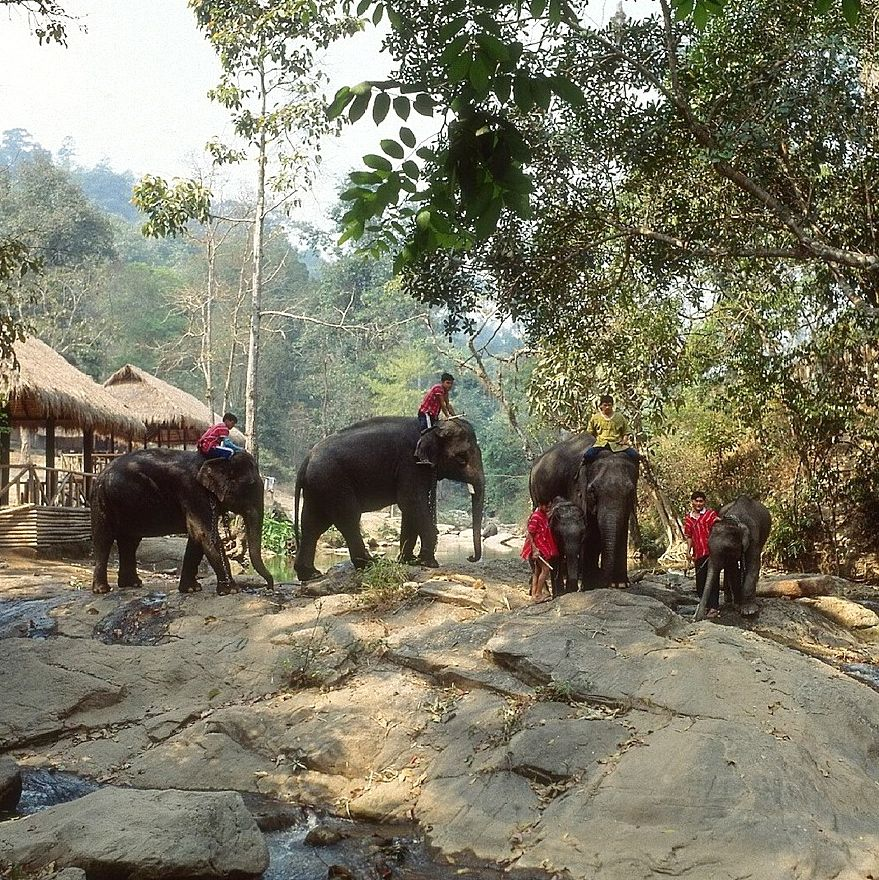 Chiang Mai - an Insider's Guide from Four Seasons Have Family Will Travel
