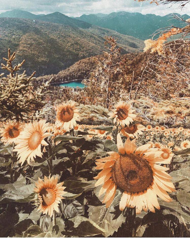 Pinterest Mollybelew Flower Aesthetic Sunflower Wallpaper Artsy Pictures
