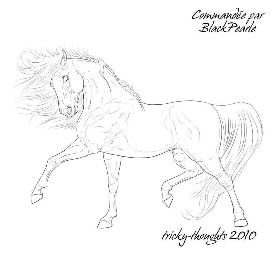 Lineart 59 By Esquisse Designs On Deviantart Line Art Drawings Horse Art Coloring Pages For Grown Ups [ 894 x 894 Pixel ]