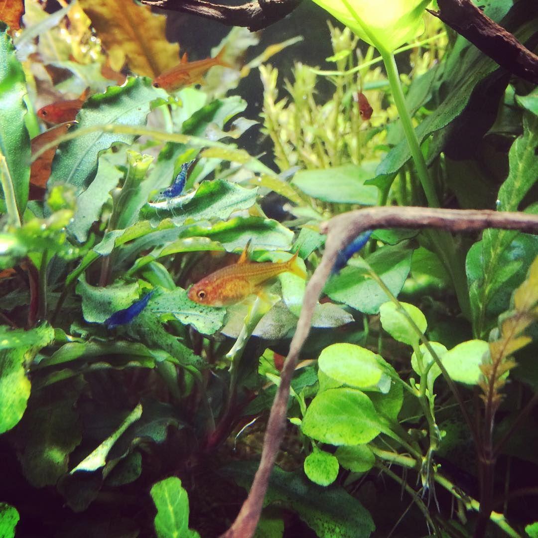 Orange and bleu #aquariumfish explore Pinterest