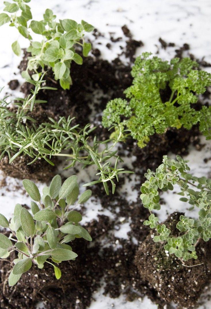 Small Space Diy Countertop Herb Garden Herb Garden Pots 400 x 300