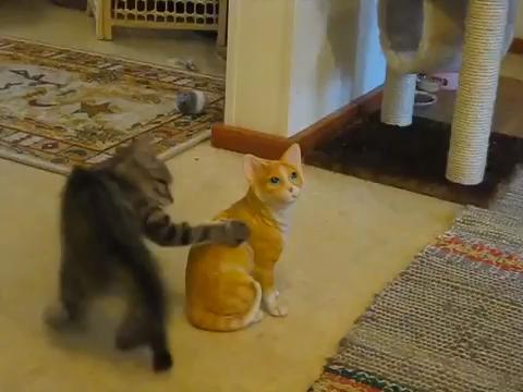 Ce besoin irrépressible de communiquer ? #kittycats