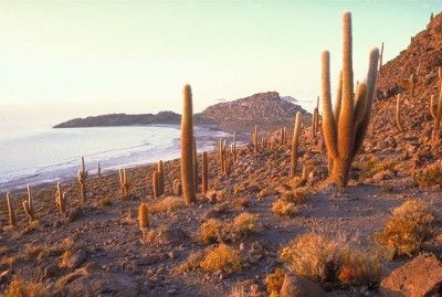 normal_cactusUyuni.jpg (400×269)