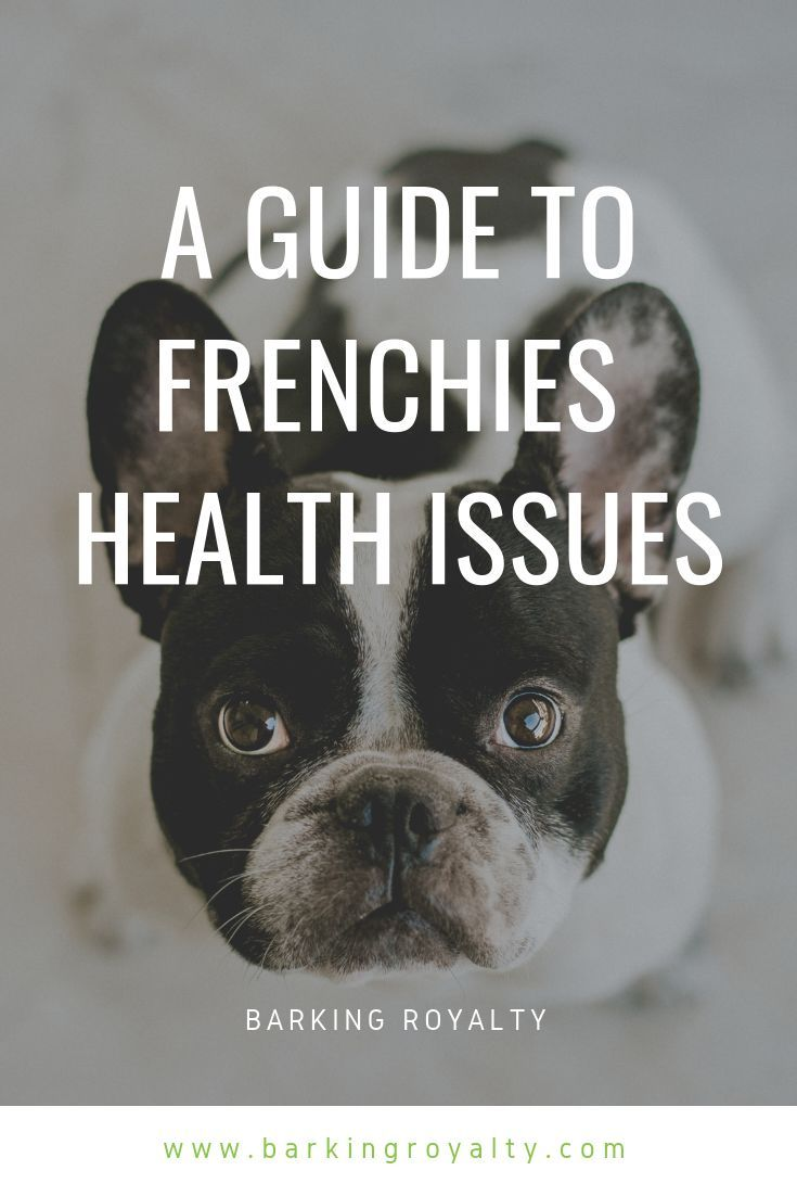 French bulldog health issues the definitive guide in 2020