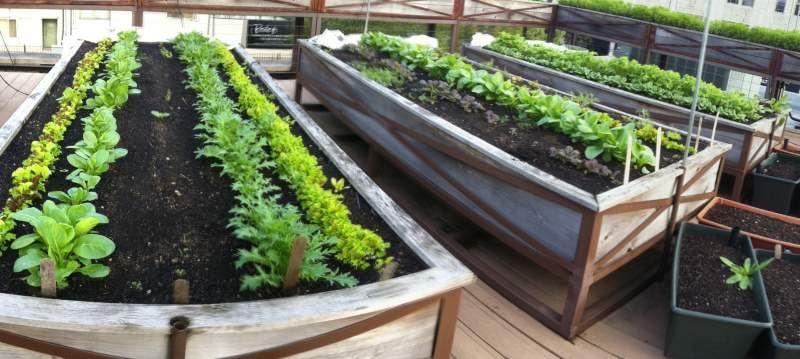 Rooftop Garden Green Roofs Planters