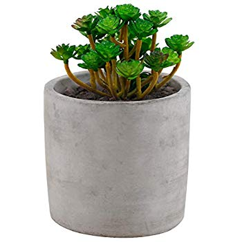 Amazon Com Copper Rose Gold Succulent Plant P*T 4 Inch 400 x 300