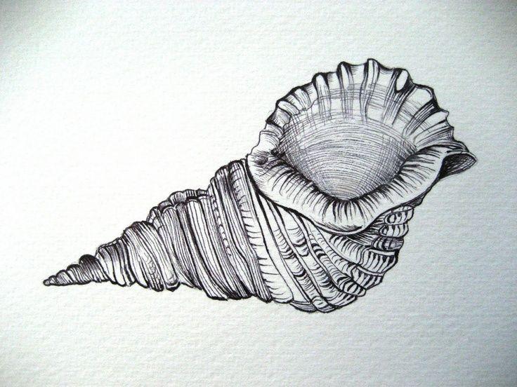Seashell Ink Drawing Seashell Drawings Google Search