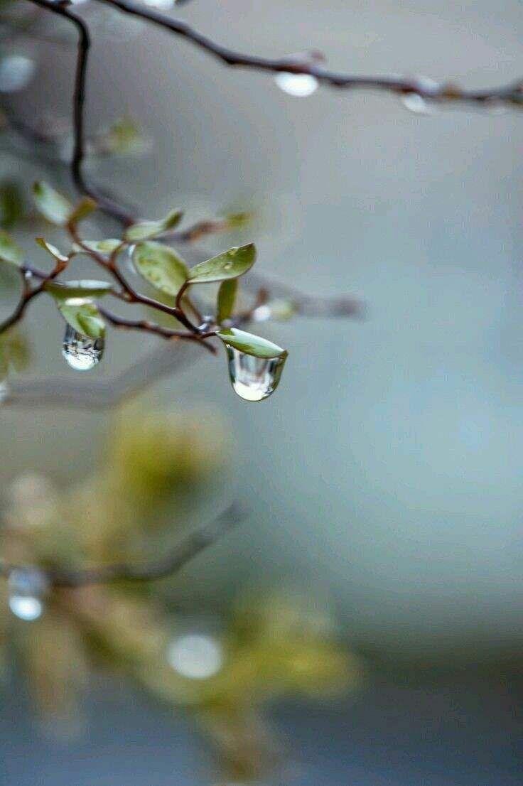 Raining Wallpaper Cool Whatsapp Status 009 Rain Wallpapers Rain Photography Rain Drops