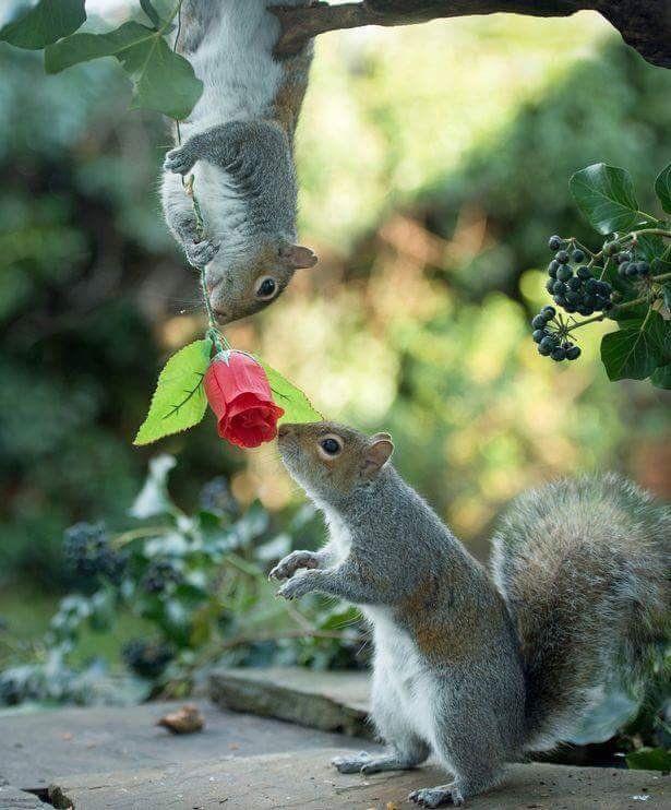 картинка белка с розами его