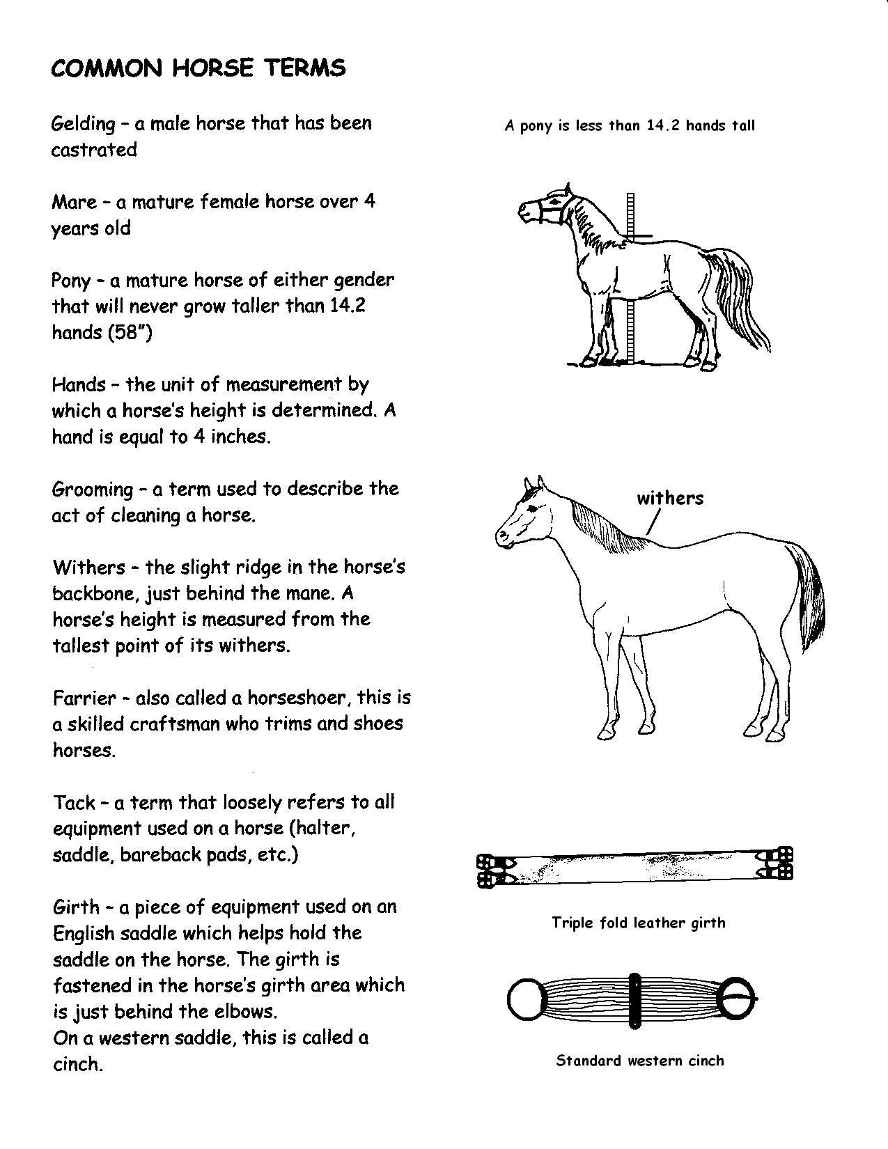 Common Horse Terms Handout With Images