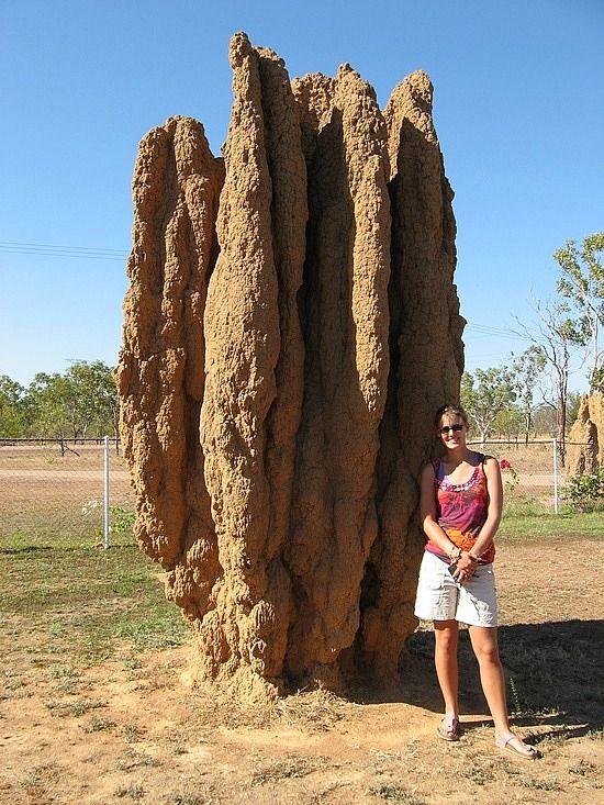 Ant hill, Australia