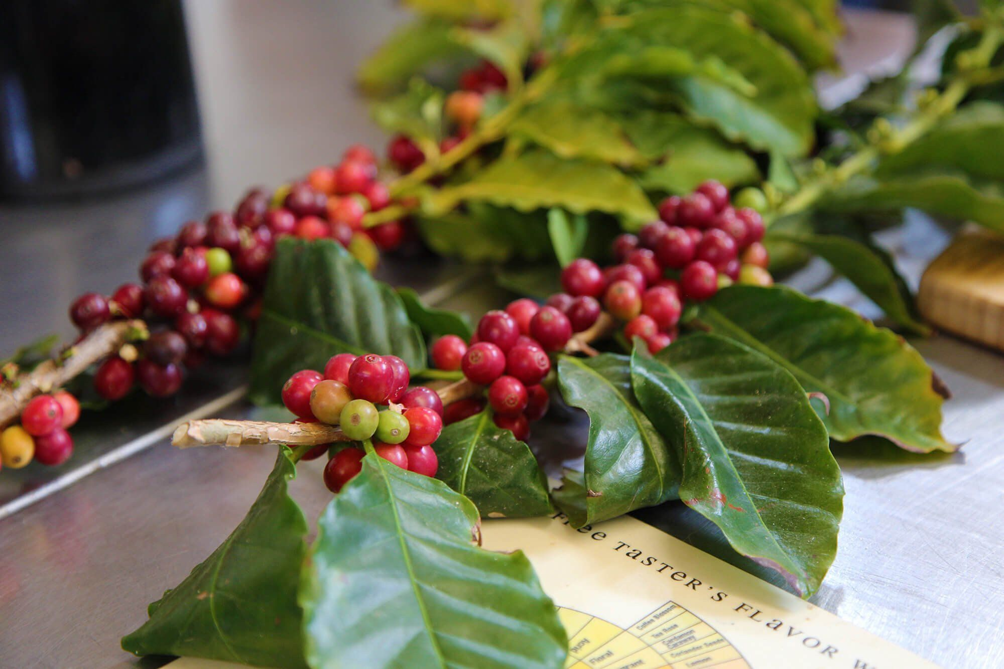 What Are The Benefits Of Caffeine In Skincare Anti Aging Vitamins Skin Care Nourishment