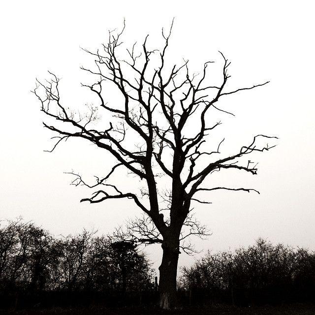 Dead Tree Tree Silhouette Tree Silhouette Tattoo Dead Tree Tattoo