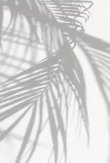 Vanishing Elephant White Background Wallpaper Shadow Photography Instagram