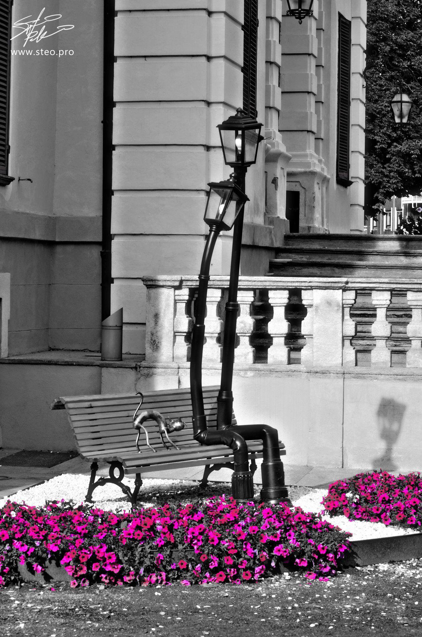 Lampioni Innamorati Streetlights In Love Paesaggi Torino Spruzzi Di Colore