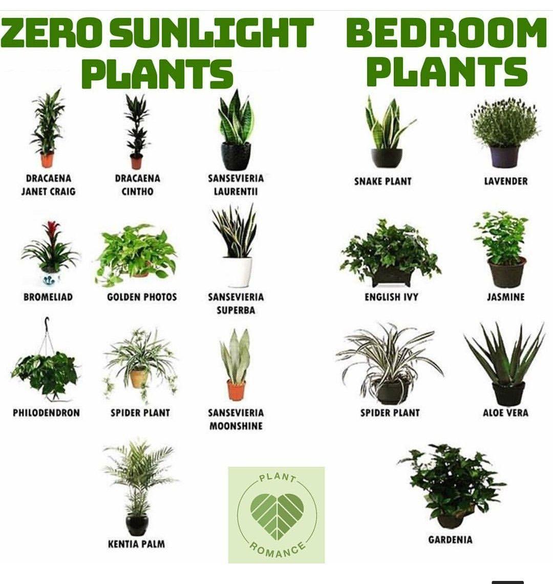 Pflanzen Growing Plants Indoors Plants House Plants Indoor,Kitchen Helper Stool Ikea