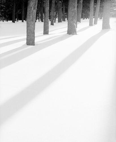 snow trees | Flickr