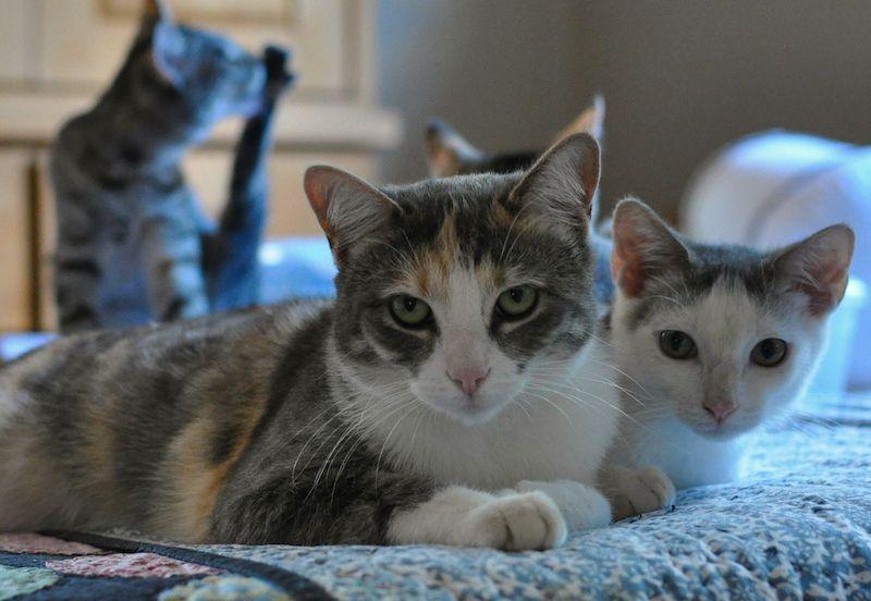 During the 2013 kitten season, a group of neighbors heard