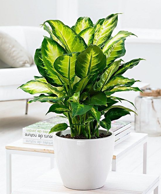 House Plants For Shady Rooms: The Perfect Low-Light Plants For Dark Spaces In Your Home