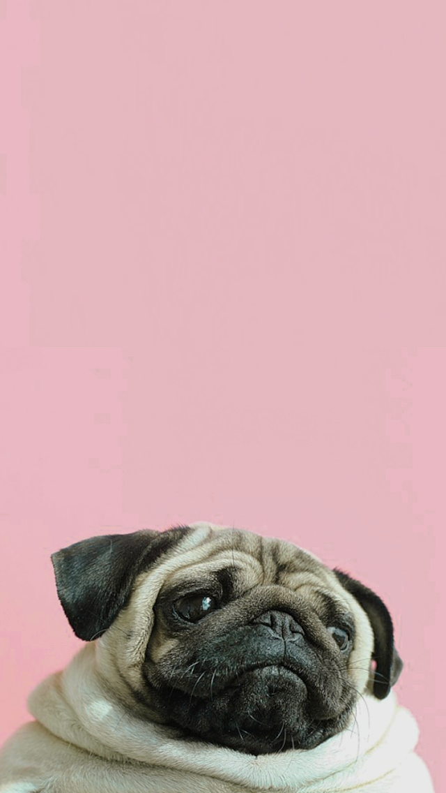 Pin By Katherina E Savoy On Patterns And Wallpapers Pug Wallpaper Dog Wallpaper Pugs