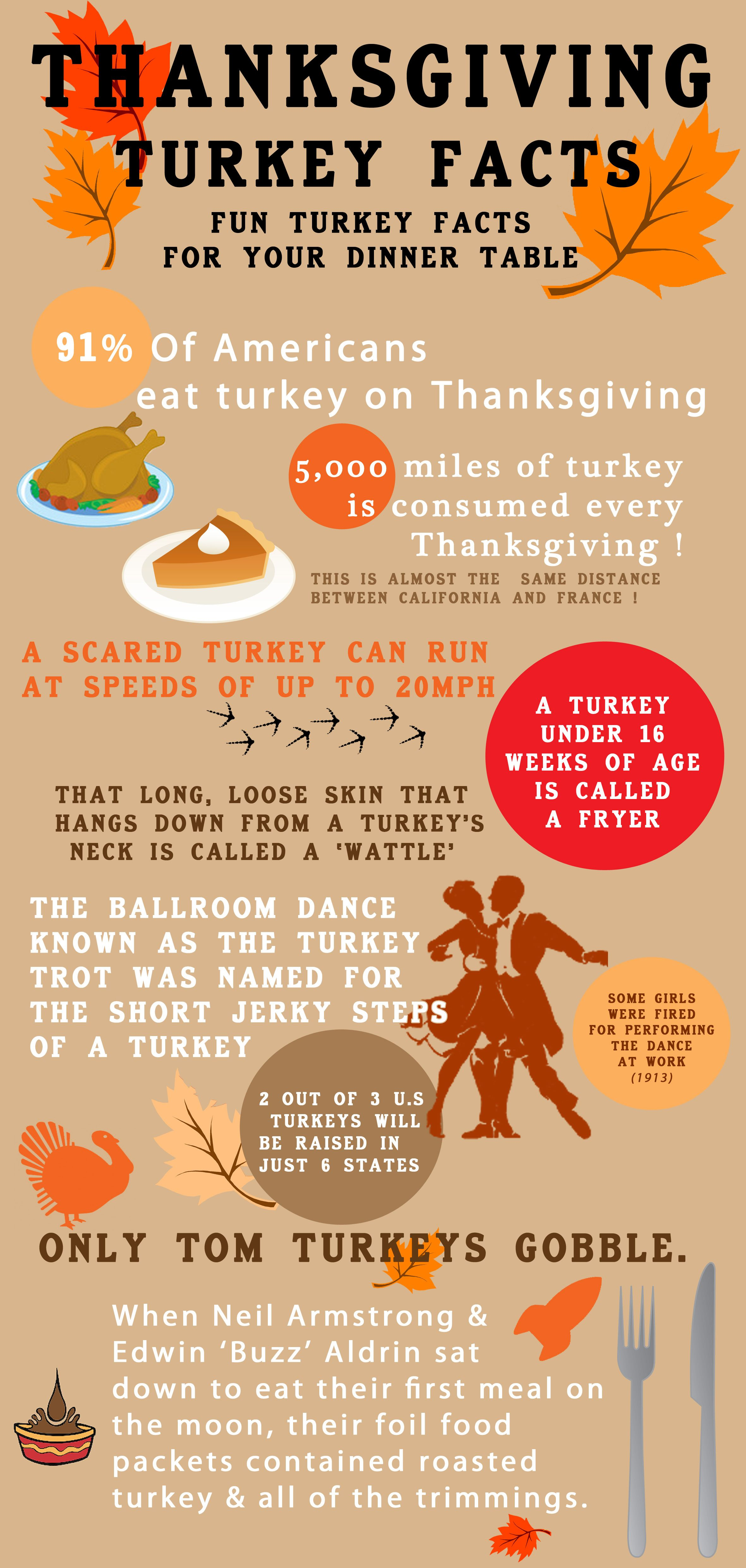 Turkey Facts Infographic For Thanksgiving Share Some Cool Turkey Facts Round The Dinner Table