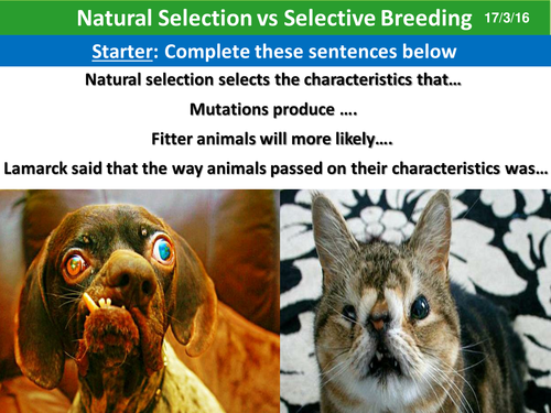 Natural Selection Vs Selective Breeding Teaching Resources Natural Selection Selective Breeding Middle School Science Teacher