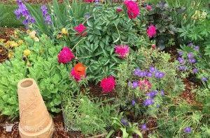 Spring blooming garden perennials