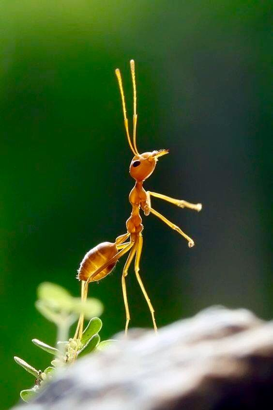 Brazilian Insects, Spiders, Crabs | Mesec brazilske kuhinje | Pinterest |  Insects and Animal