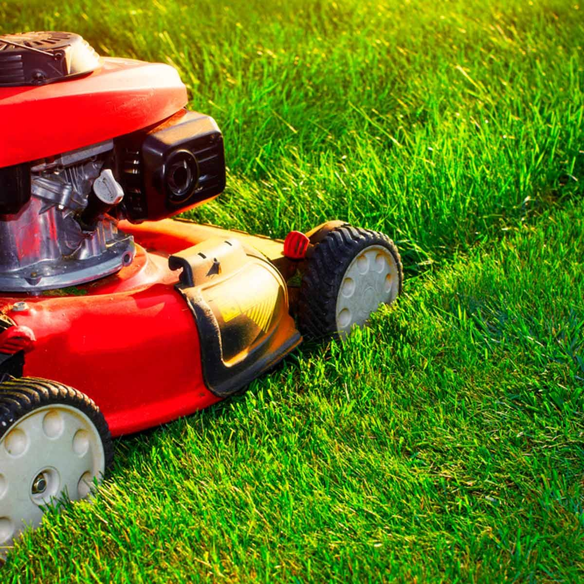 organic lawn care near me on This Is The Most Efficient Way To Mow The Grass Lawn Care Tips Organic Lawn Organic Lawn Care