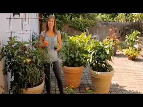 How To Grow Tomatoes Eggplants Peppers In Containers Bur Video