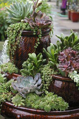 Succulent Container Gardens / Armstrong Garden Centers