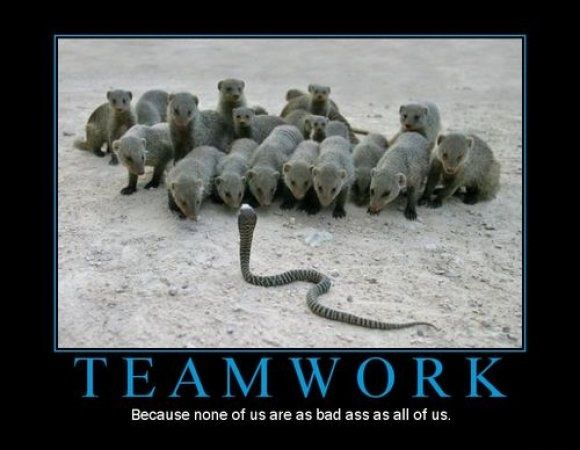 Funny Quotes About Working Together Funny Animal Memes Funny Animal Pictures Animals Wild