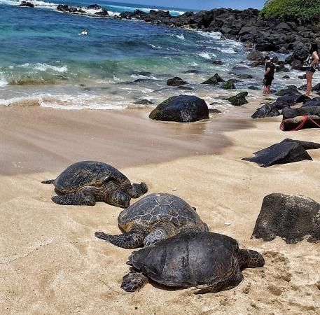 Turtle Beach Makaha Hawaii