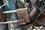 neusbeer probeert het slot van zijn verblijf open te maken