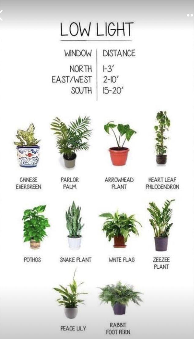 Pin By Lillian Isabelle On Houseplant Bible With Images