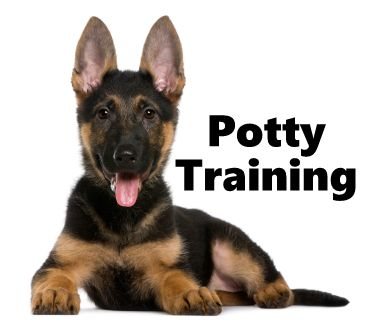 German Shepherd Puppies How To Potty Train A German Shepherd